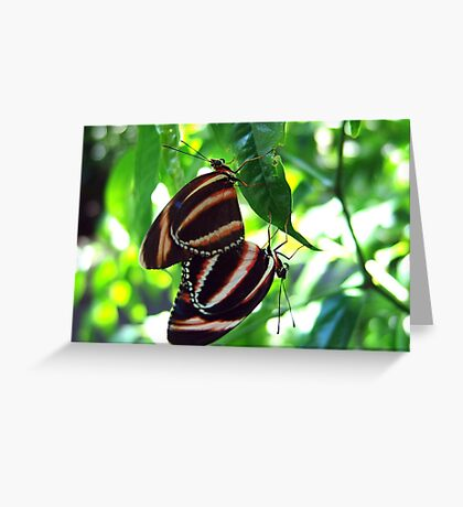 Orange Banded Butterflies - Cockrell Butterfly House Greeting Card