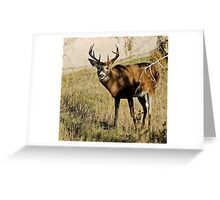 5x5 whitetail buck Greeting Card
