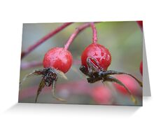 Frozen Twin Rose Hips .. wild roses Greeting Card