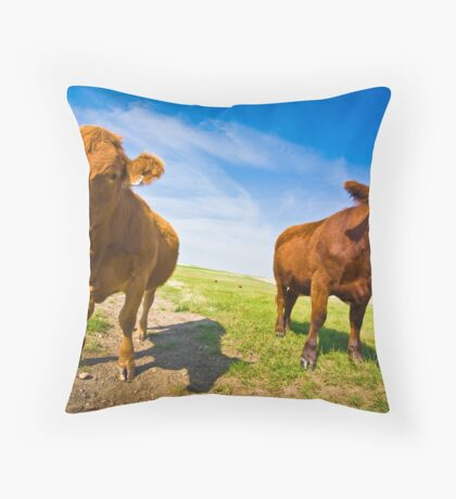 Two Serious Cows Throw Pillow