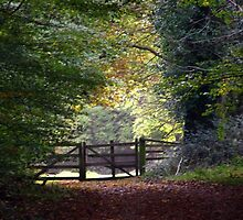 J.F.K.--Memorial Park [Please View Larger] No 11 by Pat Duggan