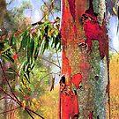 Eucalyptus Altered by Dana Roper