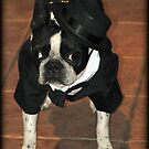 Boston Tuxedo! by Jenni Atkins-Stair