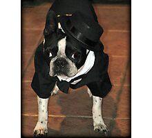 Boston Tuxedo! Photographic Print