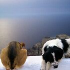 Santorini Dogs by Nadean Brennan