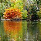 """Orange"" tree by Cricket Jones"