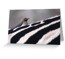 On the lookout - Hluhluwe-Umfolozi, South Africa Greeting Card