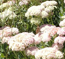 THE FLOWERS OF BEAVER DAM LAKE  by NEIL STUART COFFEY