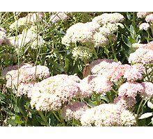 THE FLOWERS OF BEAVER DAM LAKE  Photographic Print