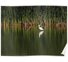 Snowy Egret in Marsh Reinterpreted Poster