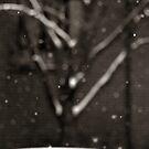 Falling Snow by John Ayo