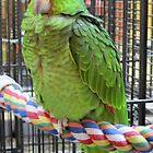 Sleepy Bird by paulineca