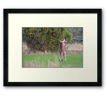 Kangaroos Framed Print