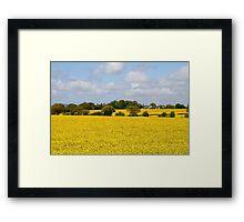 Fields of Gold. Framed Print