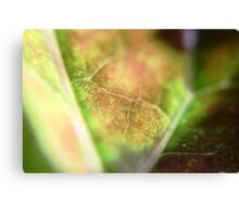 Leaf Closeup Canvas Print