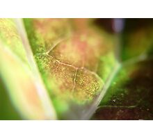 Leaf Closeup Photographic Print