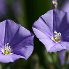 Blue Morning by Joy Watson