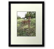 Me? You want me, right? Framed Print