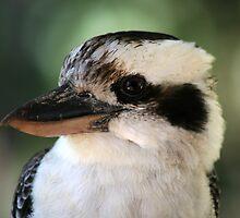 Laughing Kookaburra Not Laughing Australian Native Bird by Jane McDougall