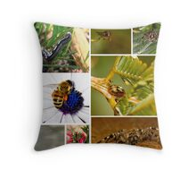 Australian nature shots of creeping flying crawling things! Throw Pillow