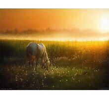 Summer morning mood Photographic Print