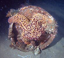 Rusty Sea Star by Walt Conklin