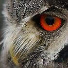 Owl  by Lindie Allen