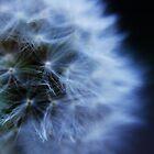 dandelion by Matthew  Smith