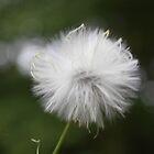 Fuzzy Feeling by Rachel Linder
