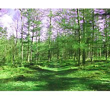 forest - Lets walk this way Photographic Print