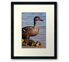 Mother Duck & Her New Babies Framed Print