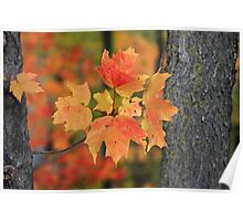 A little peice of autumn Poster
