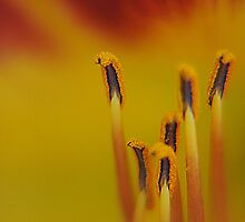Spring Macro by racystcy27