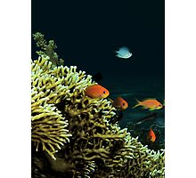 Underwater Scene Photographic Print