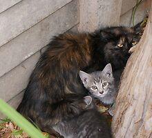 Undomesticated weening kittens - Polokwane by elmare