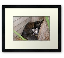 Undomesticated weening kittens - Polokwane Framed Print