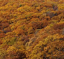 Golden Treetops viewed from the Summit by Bonnie T.  Barry
