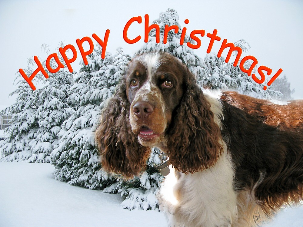Happy Springer Christmas! by Mike Paget
