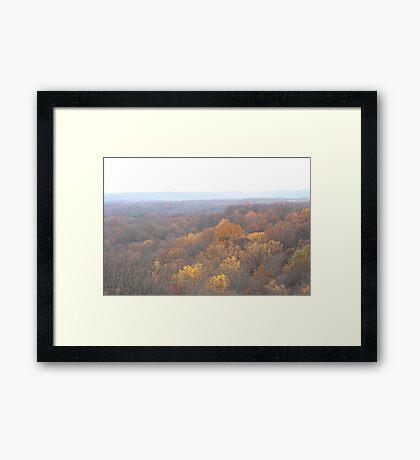 Golden Tree Tops Framed Print