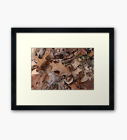 Fallen And Brown Framed Print