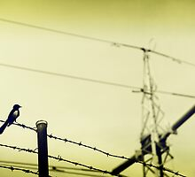 Little birdy - Fremantle Power Station by Boxx