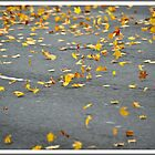 As the winds blows they fall to earth..  by vishphotography