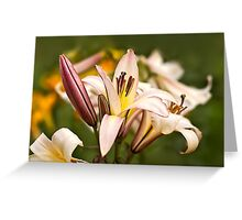 Splendid Greeting Card