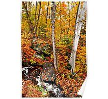 Autumnal Brook Poster