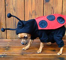 Lady Bug by Merilyn