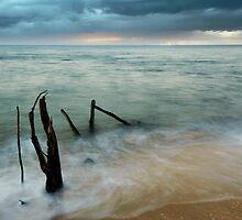 Washed Up - beach log at Ella Bay by Jenny Dean