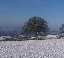 Snowy scene with 3 trees by peteton