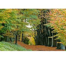 Autumnal salute Photographic Print