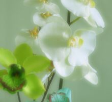 Orchids by jaeepathak