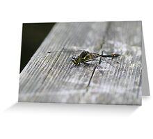 Dragon fly eye level Greeting Card